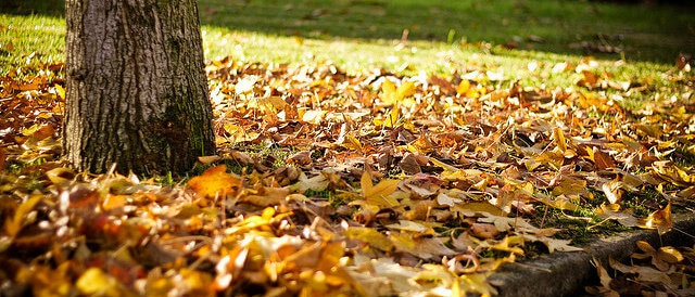 Welcome Autumn: Why Fall is so Great
